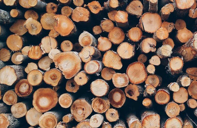 Comune di Palena: avviso acquisto legna da uso civico