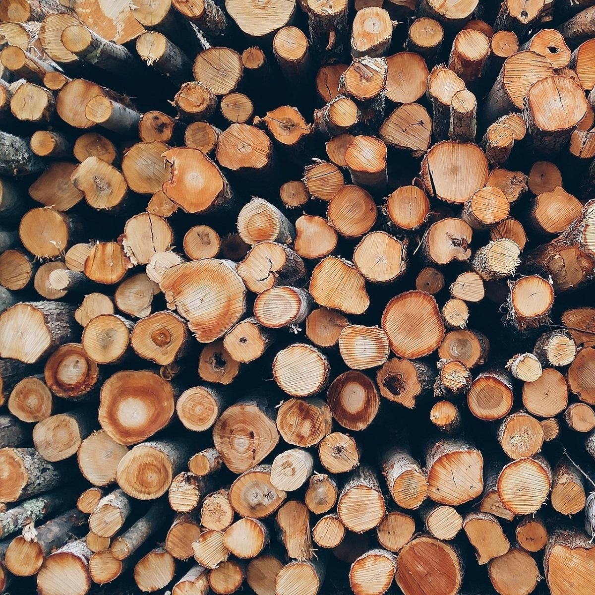 Comune di Palena avviso acquisto legna da uso civico foto