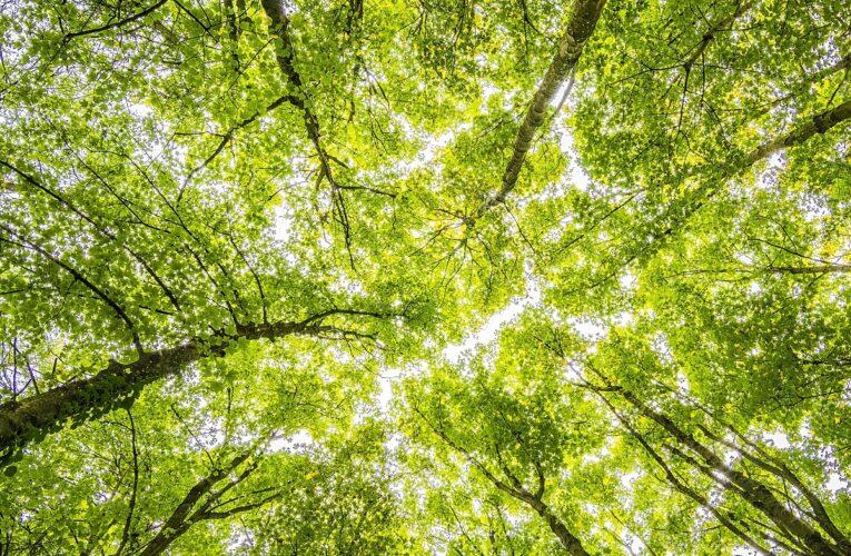 Vasto – approvato regolamento del verde pubblico