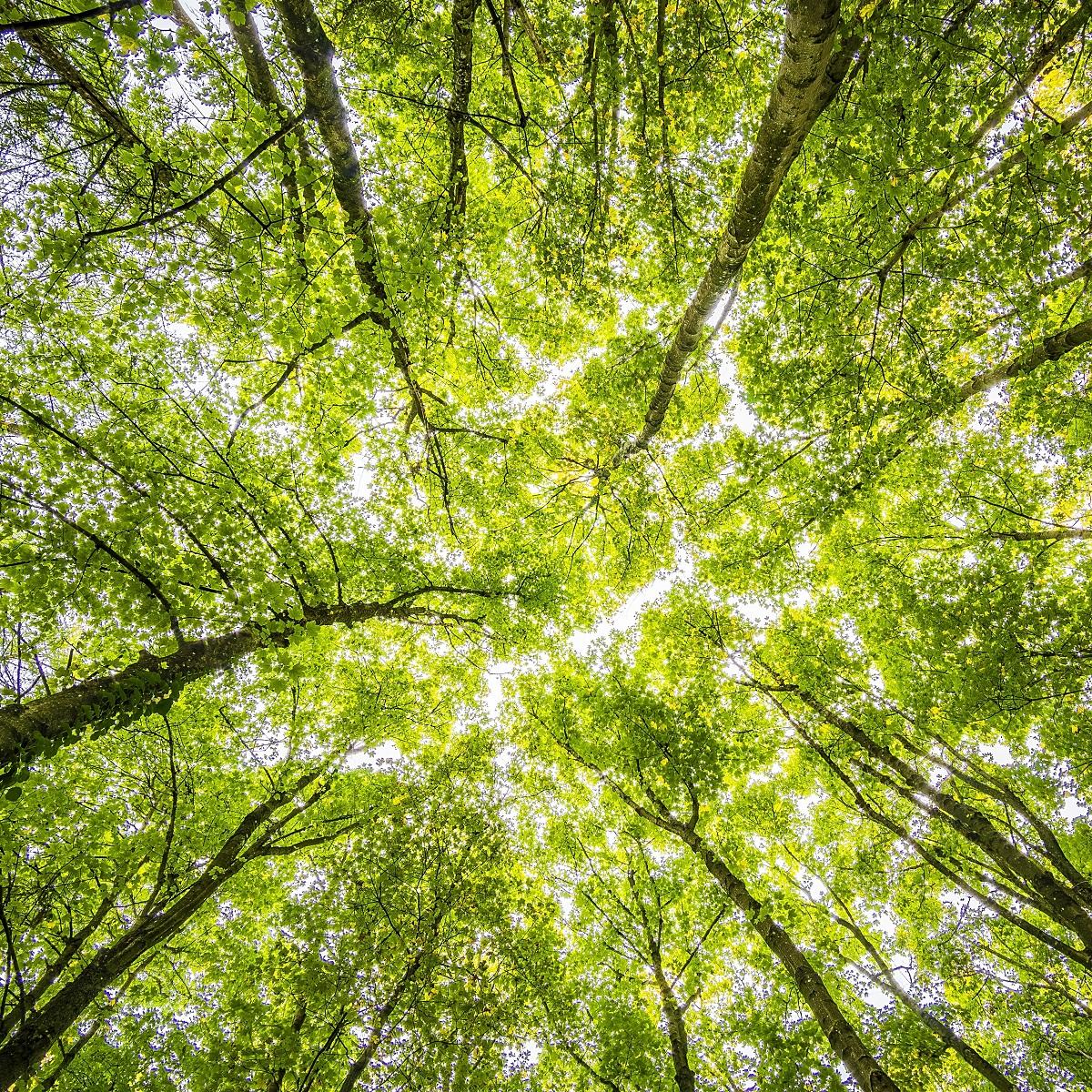 Vasto - approvato regolamento del verde pubblico foto