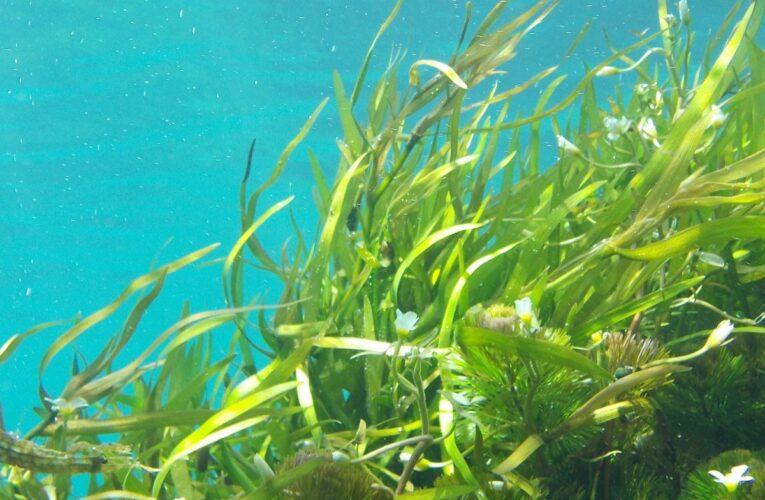 Nuove specie di alghe scoperte nel lago di Barrea