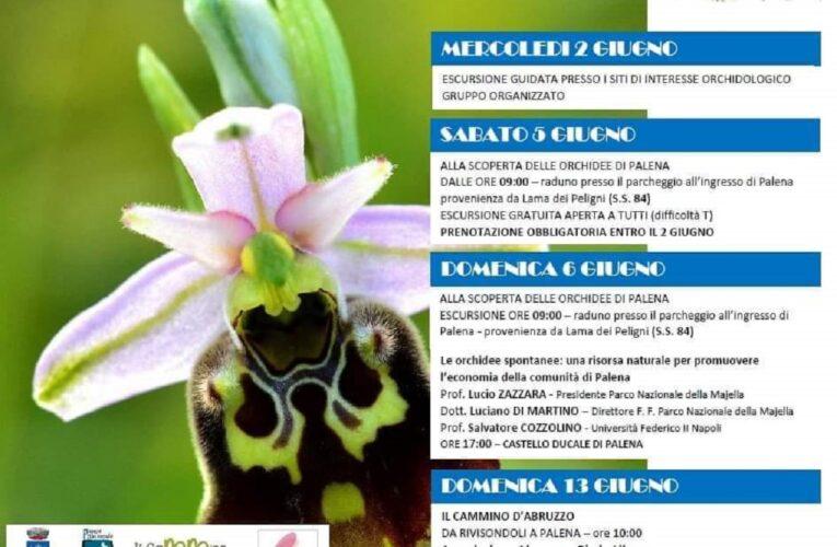Palena… nel Paese delle Orchidee